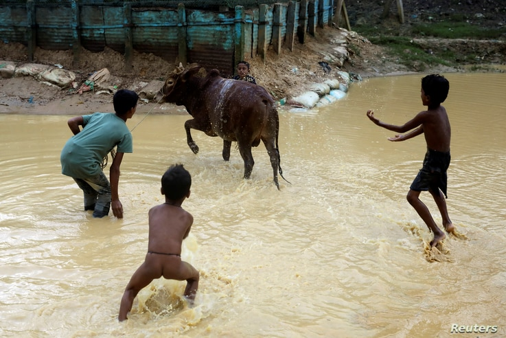 Rohingya children shower a cow before it is sacrificed for Eid al-Adha in Kutupalong refugee camp in Cox's Bazar, Bangladesh, Aug. 22, 2018.