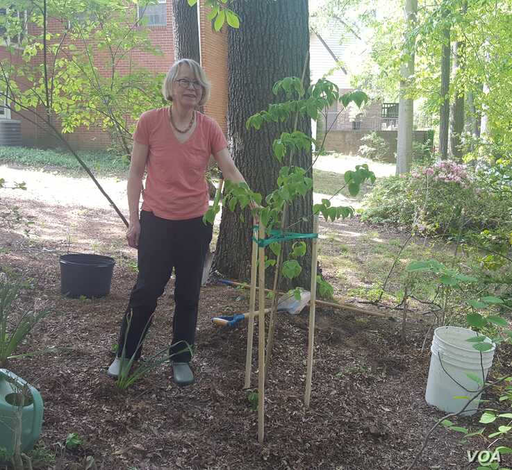 Anka Meyer of Hyattsville, Md., says trees make a huge difference in the climate and save energy.