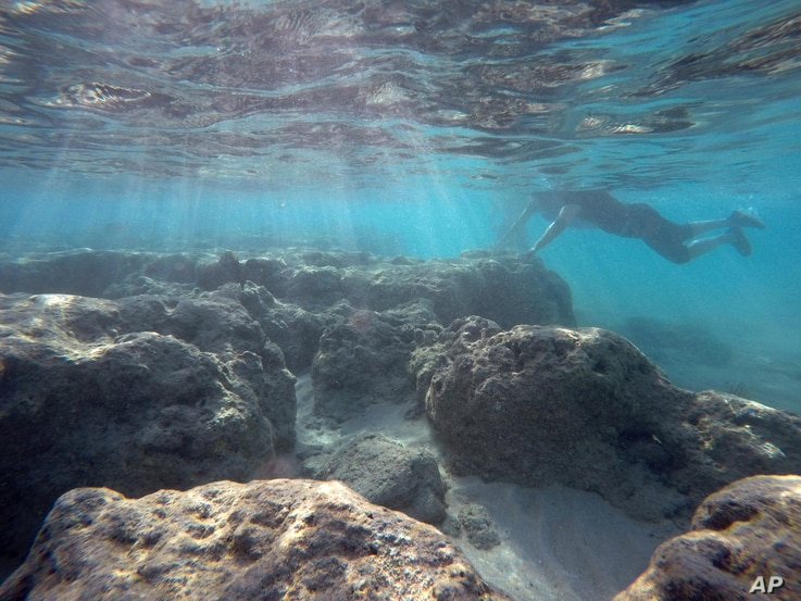 A man rests his hand on a dead reef as he snorkels in Oahu's Hanauma Bay on Wednesday, May 6, 2016 near Honolulu. Much of the inner reef at Hanauma Bay is dead after decades of tourist interaction, but the outer reef is still relatively healthy.