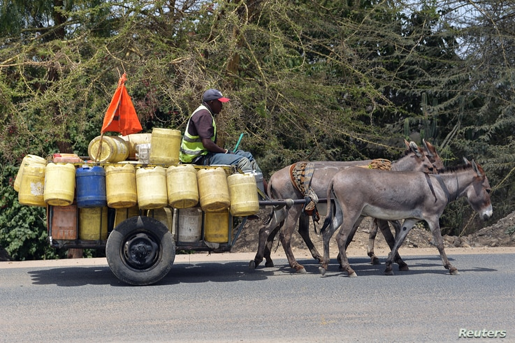 A water vendor guides a donkey cart as he transports jerrycans filled with water from the Athi River to sell in Nairobi on March 21, 2019.