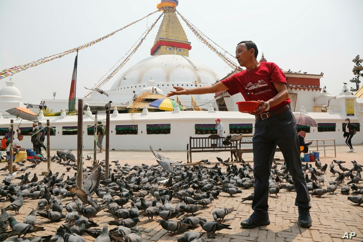 In this May 9, 2019 photo, Apa Sherpa feeds pigeons in Boudhanath Stupa in Kathmandu, Nepal. Apa Sherpa has stood on top of the world more times than all but one other person.