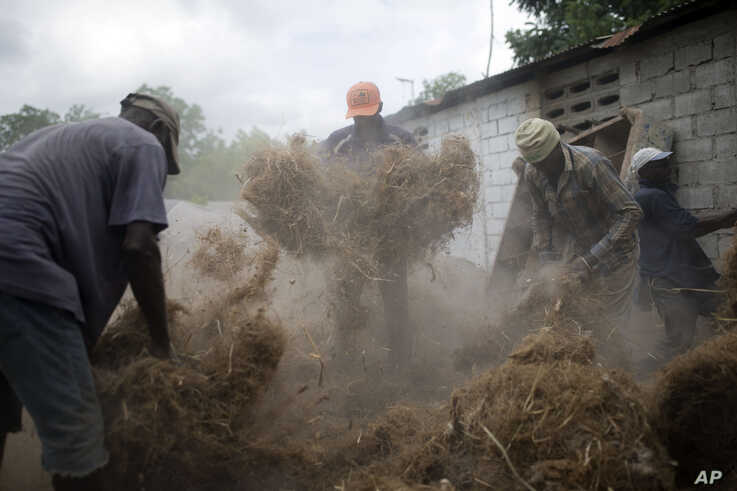Workers prepare stringy roots culled from the vetiver plant, at a factory in Les Cayes, Haiti.
