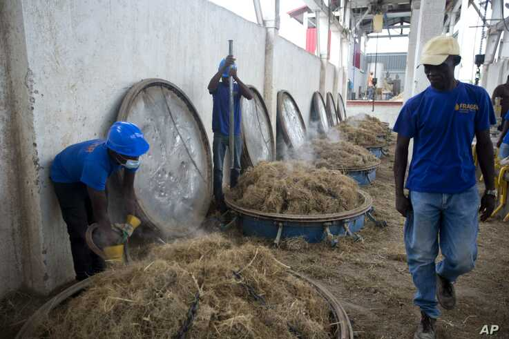Workers load vetiver roots into vats to be processed at the Frager's factory in Les Cayes, Haiti.