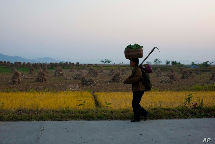 FILE - A North Korean farmer walks along a highway outside the eastern coastal city of Wonsan, North Korea, Oct. 8, 2011.