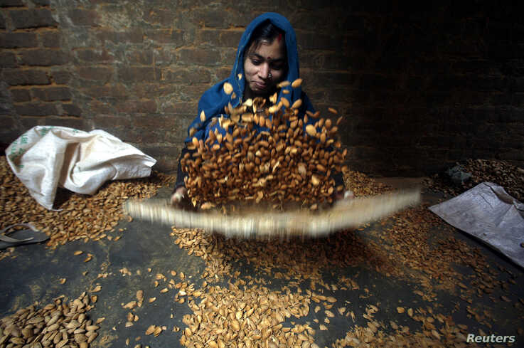 FILE - A female laborer winnows almonds inside a small-scale factory unit in New Delhi, Jan. 15, 2011. India is by far the largest buyer of U.S. almonds.