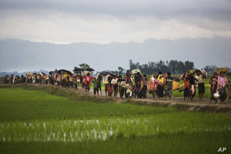 Rohingya ethnic minority from Myanmar walks past rice fields after crossing the border into Bangladesh near Cox's Bazar's Teknaf area, Sept. 1, 2017.