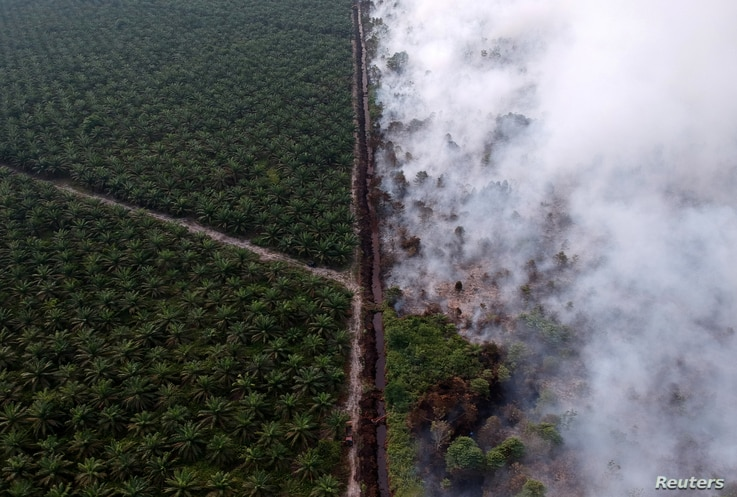 An aerial view of forest fire burning next to oil palm plantation at Kumpeh Ulu district in Muarojambi, Indonesia, in this photo taken by Antara Foto.
