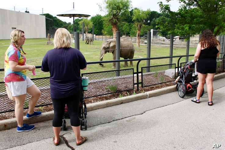FILE - Visitors watch an elephant at the Milwaukee County Zoo in Wisconsin, July 3, 2019.