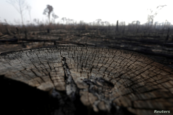 A burned tract of Amazon jungle is pictured as it is cleared by loggers and farmers near Porto Velho, Brazil, Aug. 27, 2019.