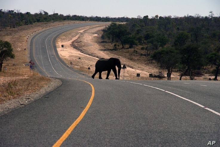 In this July 12, 2014 photo, an elephants crosses the main highway leading to Zambia in Northern Botswana.