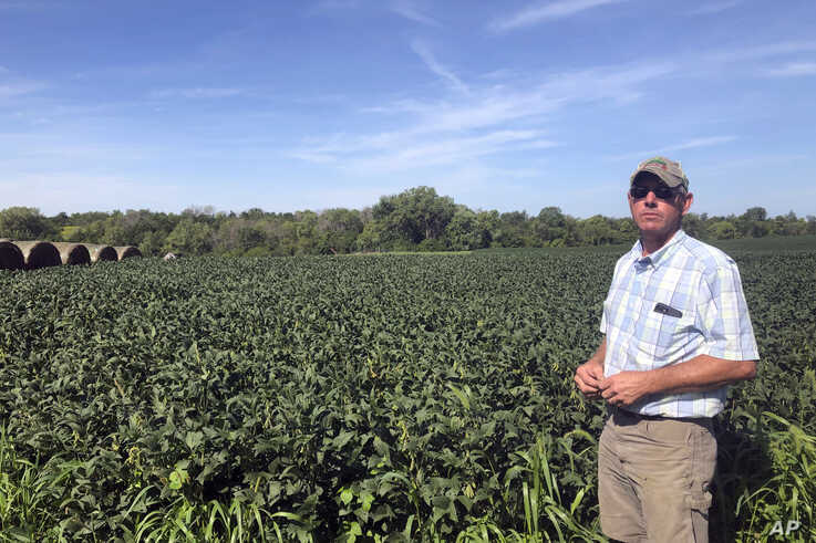 Farmer Randy Miller is shown with his soybeans, Thursday, Aug. 22, 2019, at his farm in Lacona, Iowa. Miller, who also farms cor