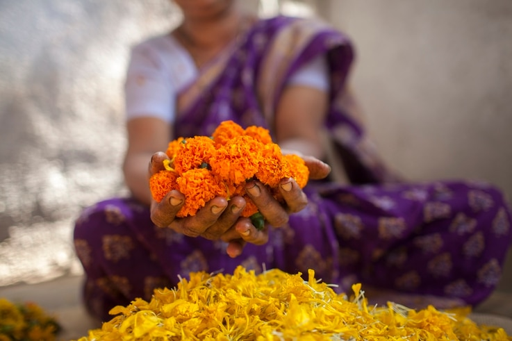 Rupa Trivedi's workshop, Adiv Pure Nature, uses 900 kilos of marigold petals a week to dye fabrics. (True Colors by Keith Recker)