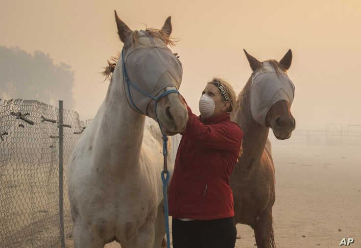 Volunteers help evacuate horses during the Easy Fire, Oct. 30, 2019, in Simi Valley, California.