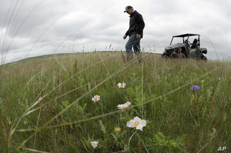 Jerry Doan walks through grasslands next to a wetland he restored on his land near Sterling, N.D., on Friday, June 21, 2019…