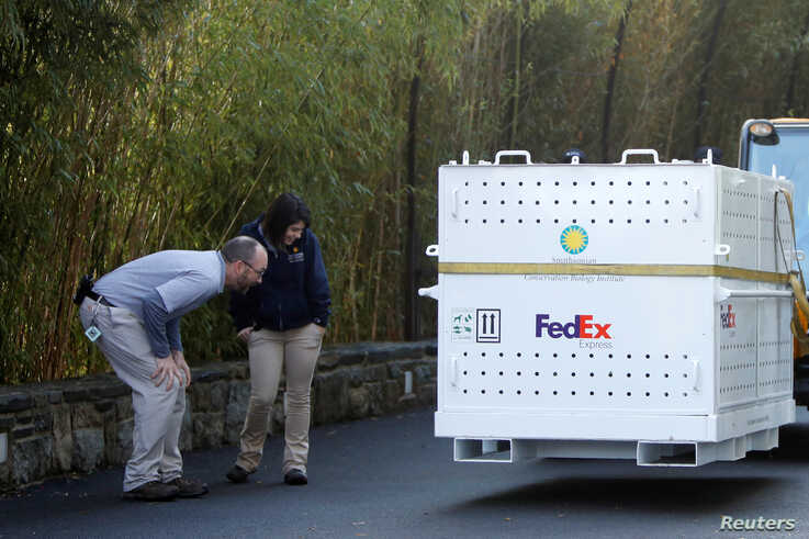 Workers look at a FedEx's crate where Bei Bei, the giant panda, has been placed before his departure to China, at the…