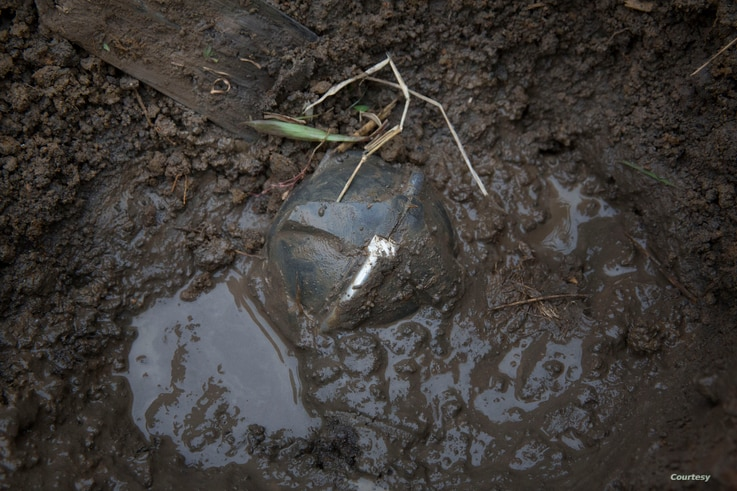 An unearthed cluster bomb lies in the mud in Xiangkhouang Province, December 2014. (Sean Sutton/MAG)