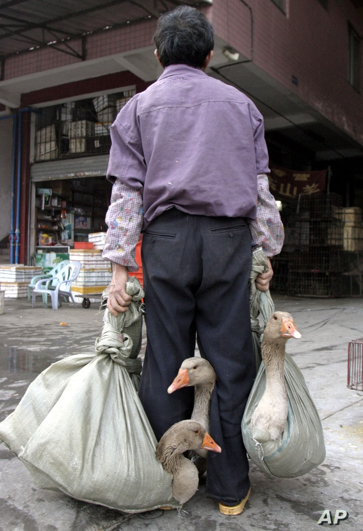 A Chinese man carries sacks containing geese at a live-animal market in Guangzhou, Southern China, in this photo taken Jan 6,…