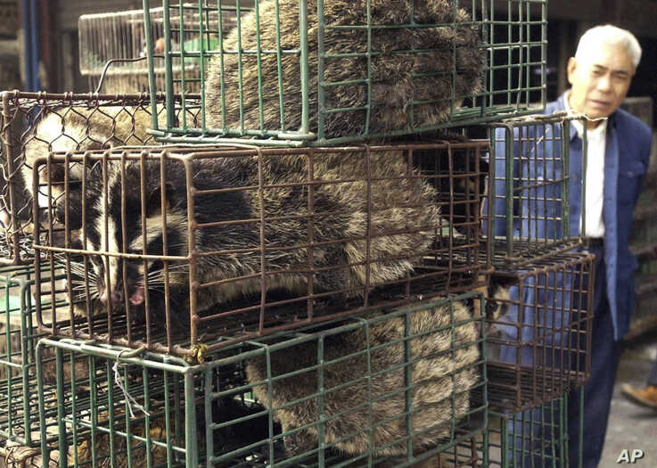 FILE - A man looks at caged civet cats in a wildlife market in Guangzhou, capital of south China's Guangdong Province, China, Jan. 5, 2204.
