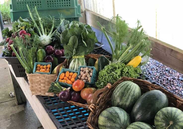 Vegetables from Lee's farm