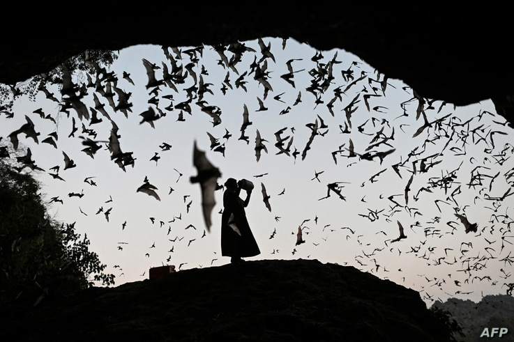 A woman makes noise as she directs the bats away from power tower in Hpa-An, Karen State, Myanmar.