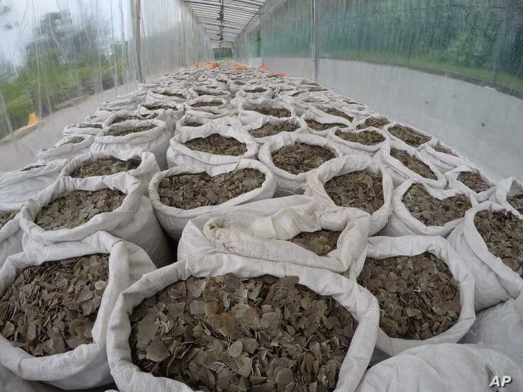 In this April 9, 2019, photo released by the National Parks Board, over 12 tons of pangolin scales worth around US$38.1 million…