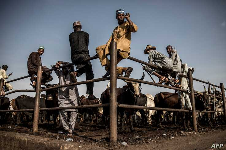 Hausa-Fulani pastoralists and cattle buyers wait for cattle transactions while sitting on a metallic fence at Kara Cattle…