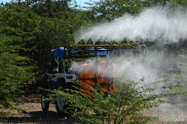 FILE - Insecticides are sprayed from a tractor to kill locusts in trees near Miyal village in Banaskantha district some 250km from Ahmedabad, India, Dec. 27, 2019.