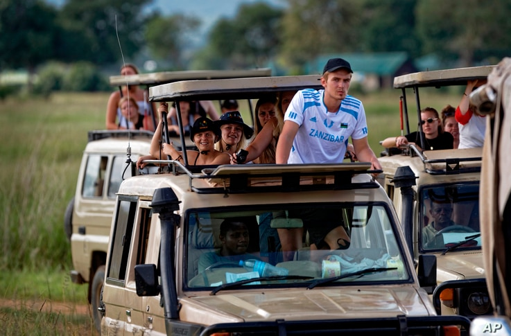 In this photo taken Saturday, March 24, 2018, tourists drive in safari vehicles to get a view of a female lion in Mikumi…
