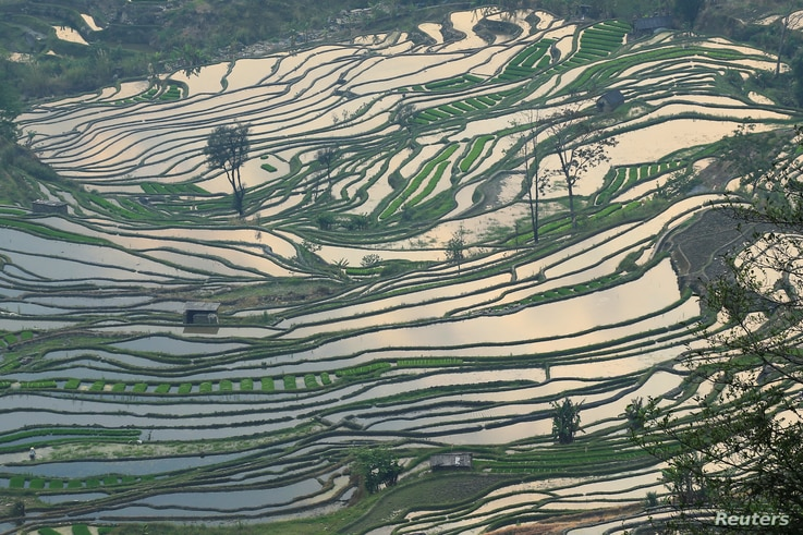 A terraced rice paddy field is seen after rain in Honghe Hani and Yi Autonomous Prefecture, Yunnan province, China March 19,…