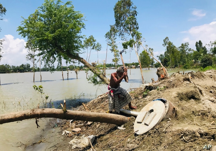 A Bangladeshi elderly person cuts an uprooted tree as the area around him is seen submerged with flooded waters in Manikganj,…