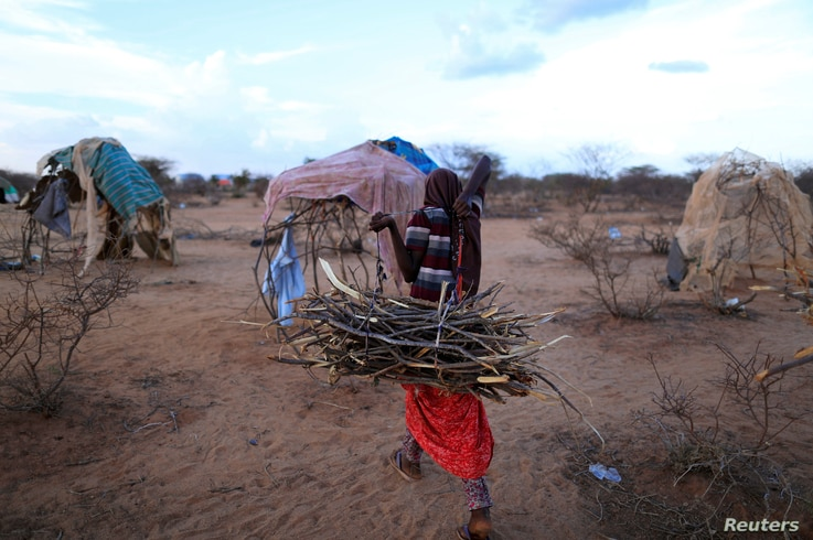 An internally displaced woman from a drought hit area carries firewood for cooking near her shelter at a makeshift settlement…