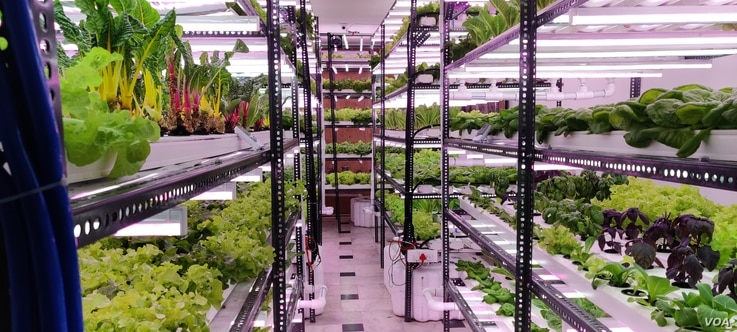 The hydroponic farm is situated on the top floor of a building.