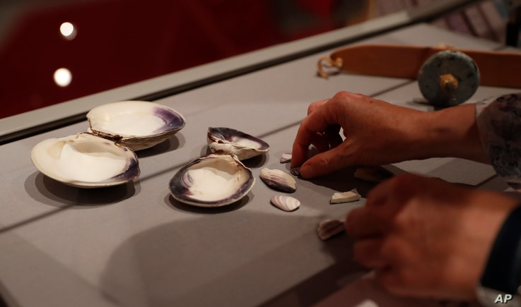 Co-curator Jo Loosemore adjusts a display of the white and purple shells of whelks and quahog, the shells to make a wampum belt by members of the Wampanoag native American people, at the SeaCity museum in Southampton, England, Aug. 13, 2020.