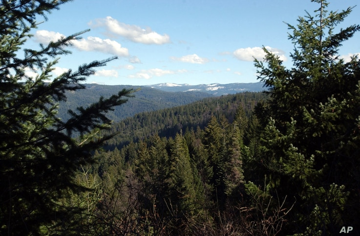 ** ADVANCE FOR SUNDAY MARCH 6 ** Part of the Tahoe National Forest, is seen near Nevada City, Calif., Feb. 24, 2005.  (AP Photo…