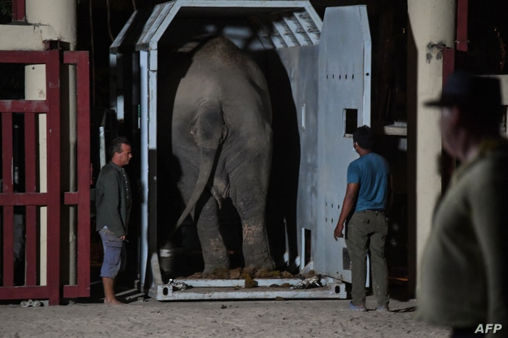 Kaavan the Asian elephant is released into his new home in the Kulen Prom Tep Wildlife Sanctuary in Oddar Meanchey Province on…