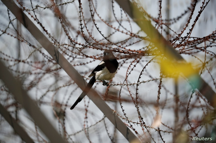A bird sits on a barbed wire fence near the demilitarized zone separating the two Koreas in Paju, South Korea, June 16, 2020…