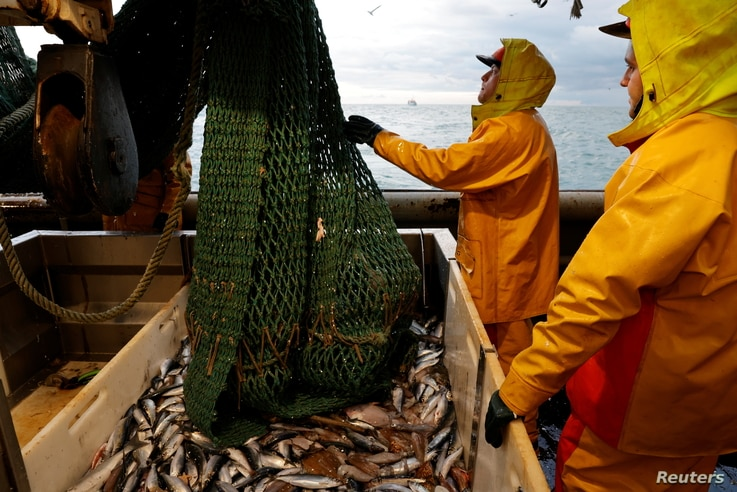 """Fishermen empty a fishing net aboard the Boulogne-sur-Mer based trawler """"Nicolas Jeremy"""" in the North Sea, off the coast of…"""
