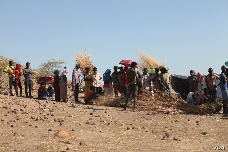 2372: Ethiopian refugees collect materials to make huts and awnings on Dec. 10, 2020 in the Um Rakouba camp in Sudan. (VOA/ Mohaned Bilal)