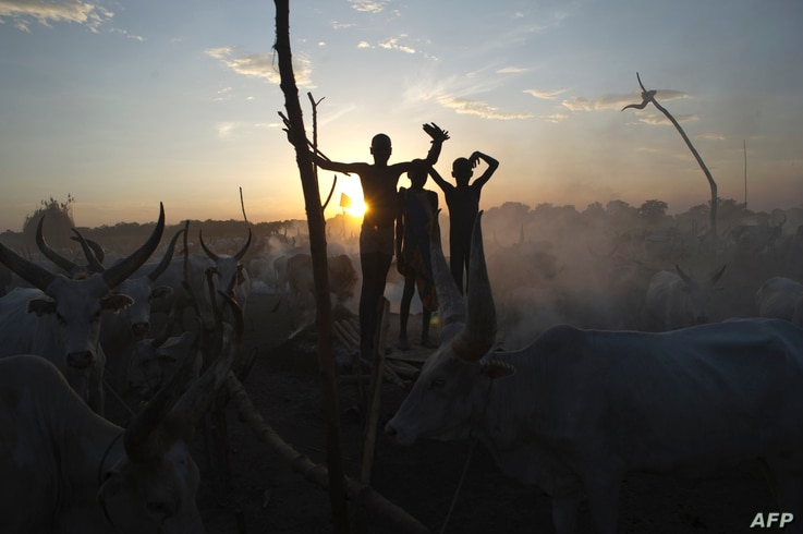 South Sudanese cattle herders stand among their animals in a field in Terekeka, in the Central Equatoria state of South Sudan,…