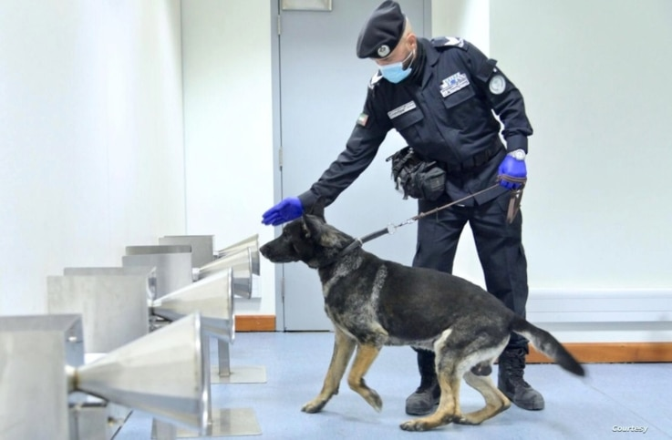 At the Dubai airport in the United Arab Emirates, a police dog trained to detect COVID-19 smells a sweat sample from a passenger to determine if the virus is on it. (Courtesy of Emirates News Agency)