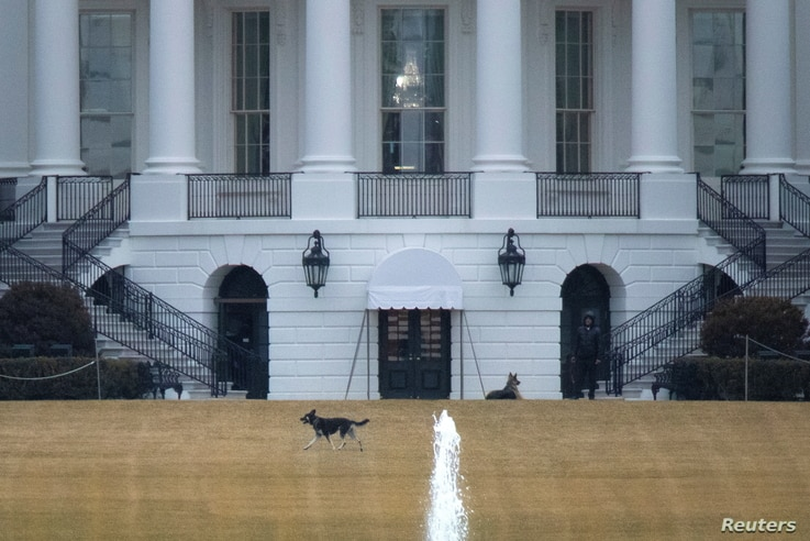 """U.S. President Joe Biden's dogs Champ and Major, known as the """"First Dogs"""", are seen on the South Lawn at the White House in…"""