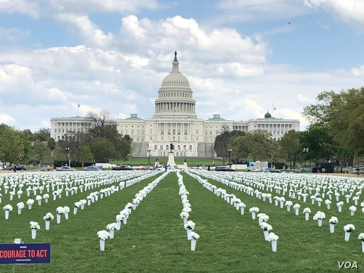 The gun control group Giffords placed 40,000 bouquets on the National Mall in Washington, to represent the 40,000 Americans who die annually from gun violence. (Lynn Davis/VOA)