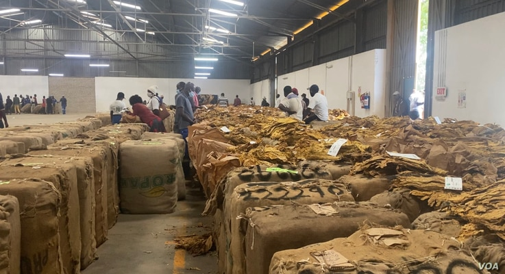 Workers at a tobacco auction floor in Marondera about 100km east of east of Harare's Zimbabwe's capital on April 10, 2021(Columb