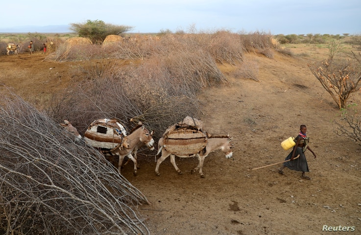 A girl leads donkeys as Turkana people migrate to find water and grazing land for cattle in Ilemi Triangle, Kenya, July 23,…