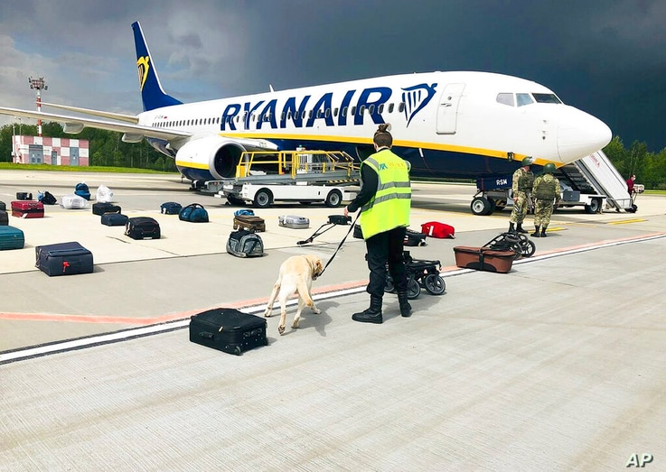 In this photo provided by ONLINER.BY, security use a sniffer dog to check the luggage of passengers on the Ryanair plane with…