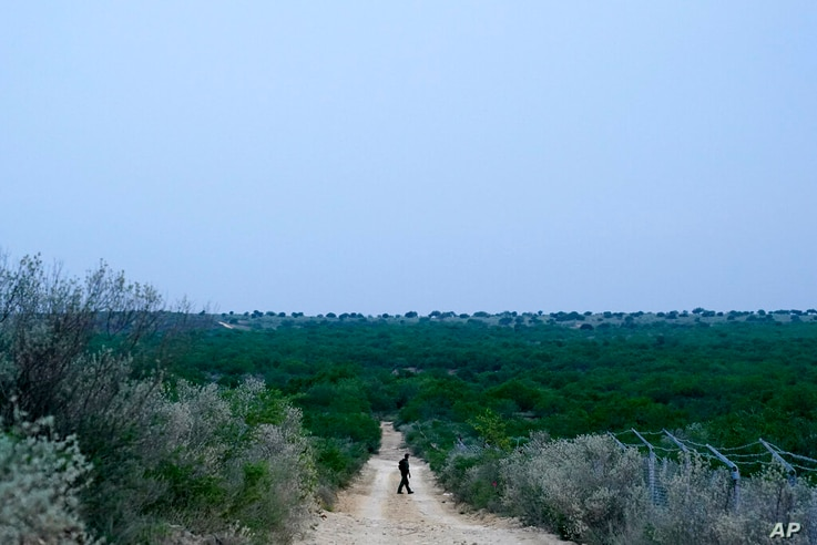 FILE - In this May 11, 2021, file photo a Border Patrol agent walks along a dirt road near the U.S.-Mexico border, in Roma,…
