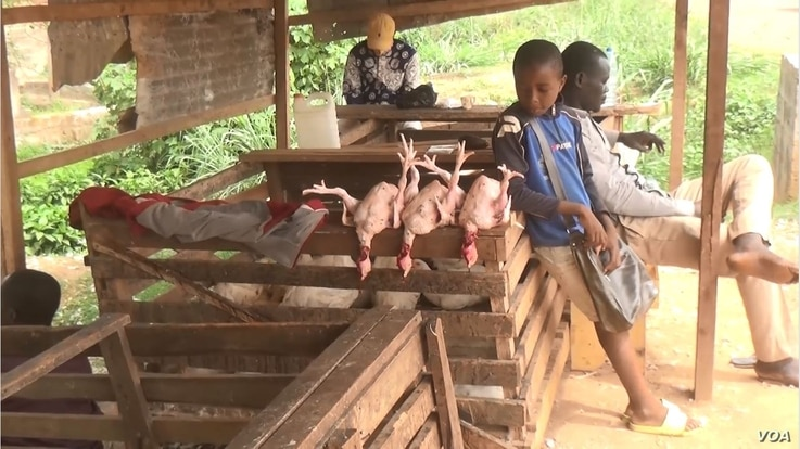 A teenager selling poultry waits for customers, in Bertoua, Cameroon, April, 6, 2021. (Moki Edwin Kindzeka/VOA)