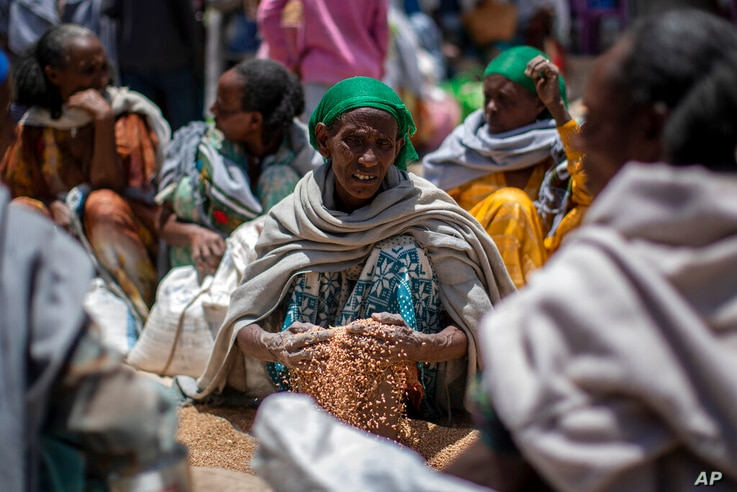 In this Saturday, May 8, 2021, photo, an Ethiopian woman scoops up grains of wheat after it was distributed by the Relief…