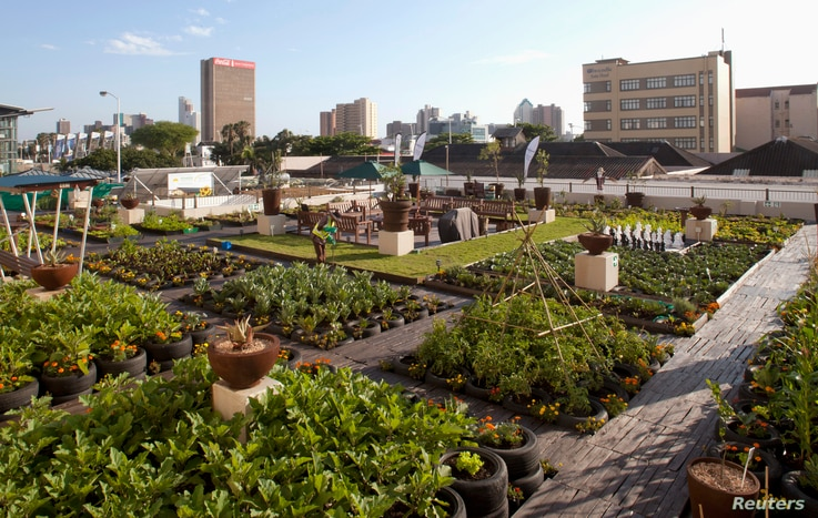 A rooftop garden on a building across the street from the International Covention Centre where the United Nations Climate...