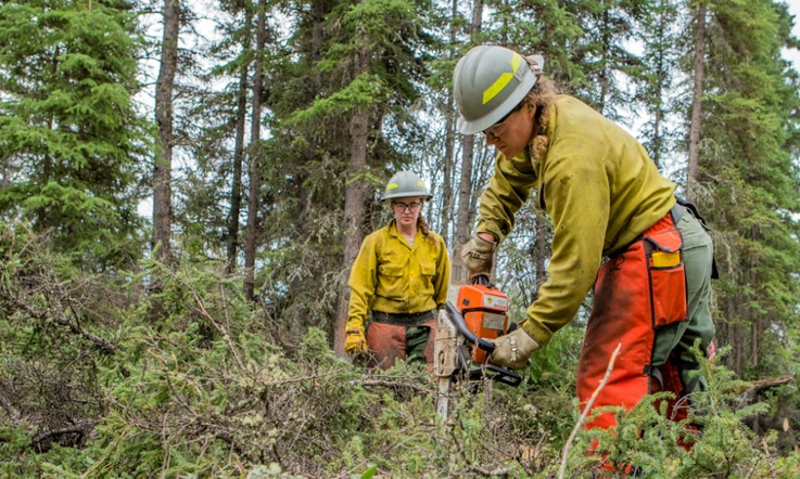 Members of a firefighting crew clear brush to create a fire break on the 2019 Hadweenzic River Fire in Alaska.